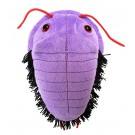 Trilobita (Asaphiscus wheeleri)