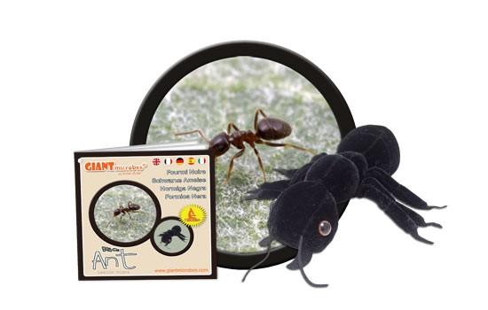 Hormiga Negra (Lasius niger)