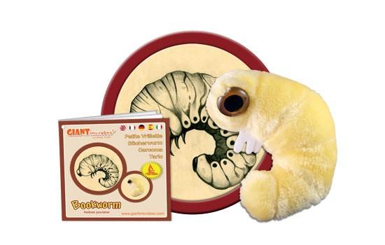 Carcoma (Anobium punctatum)
