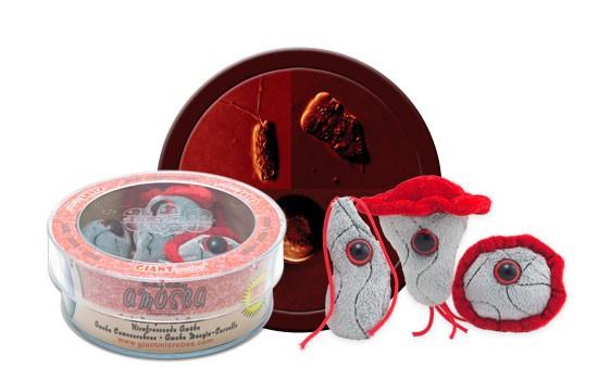 Ameba Comecerebros (Naegleria fowleri) placa Petri