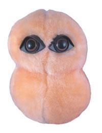 Neumonía (Streptococcus pneumonia)