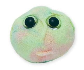 Stem Cell doll
