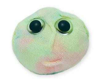 Células Madre (Células madre hematopoyéticas)