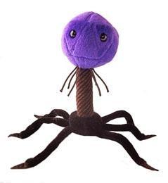 T4 (T4-Bacteriophage)