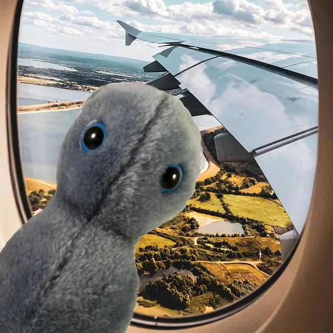 Clap on airplane