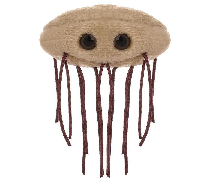 E. coli plush front