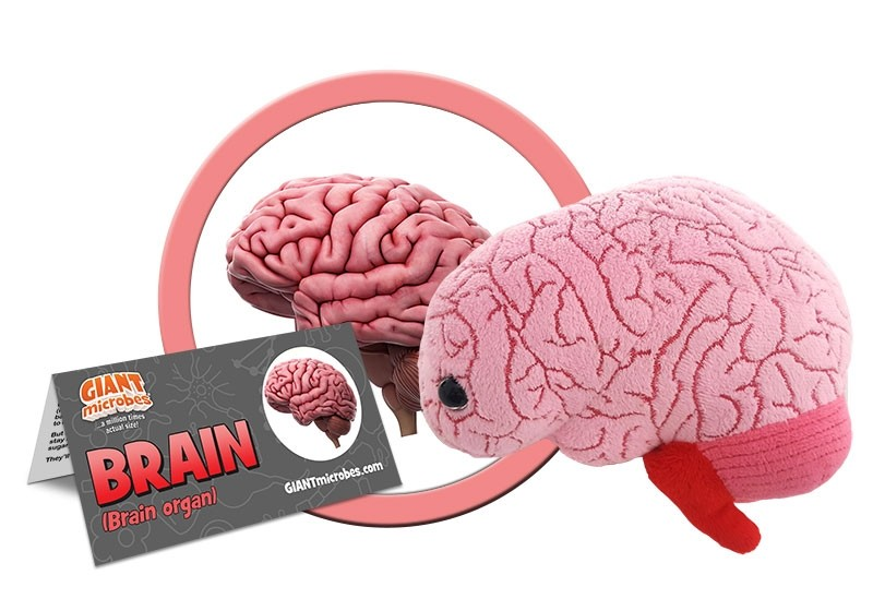 Brain organ plush doll