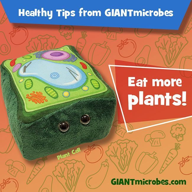 Plant Cell healthy tips