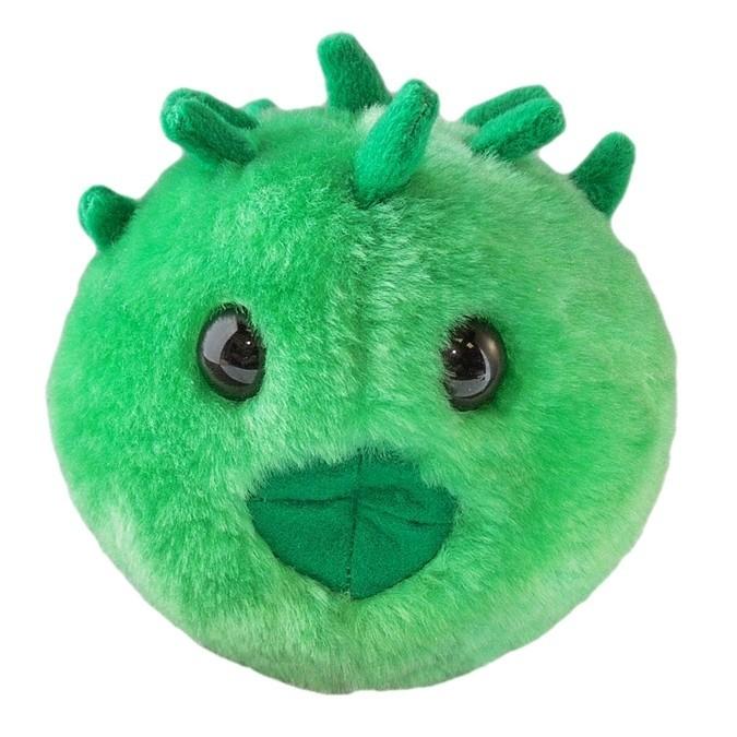 Chlamydia (Chlamydia trachomatis)