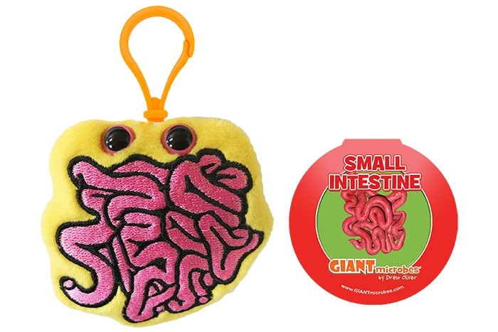 Small Intestine key ring