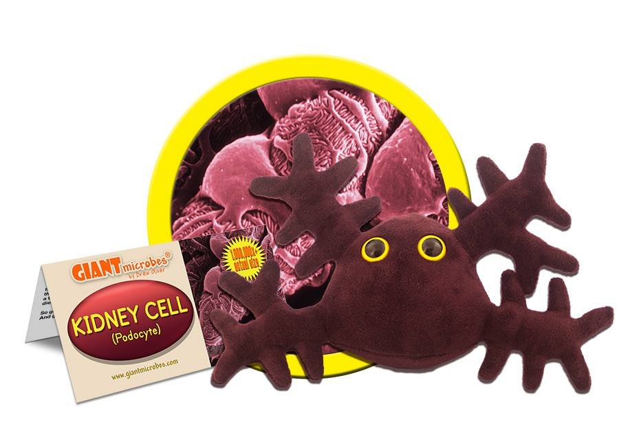 Kidney Cell doll