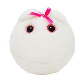 Egg Cell (Human ovum)