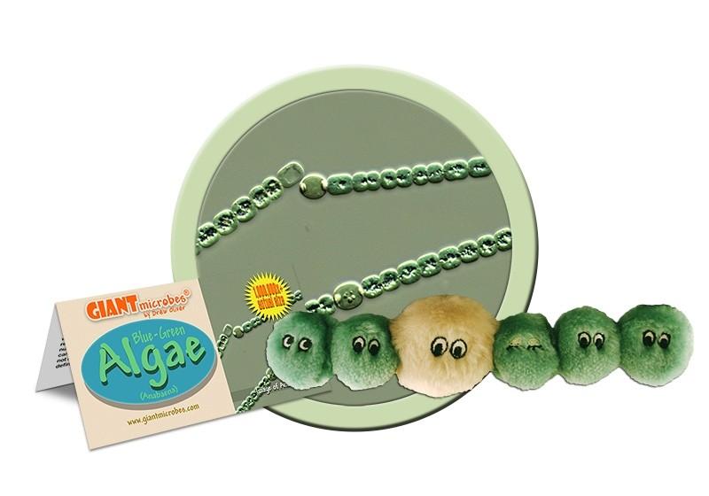 Algae (Anabaena)