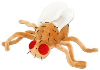 Fruit Fly plush doll