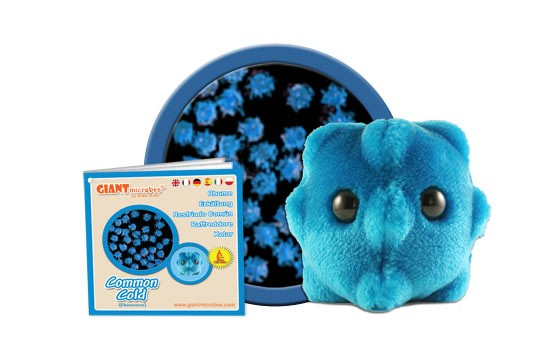 Common Cold (Rhinovirus)