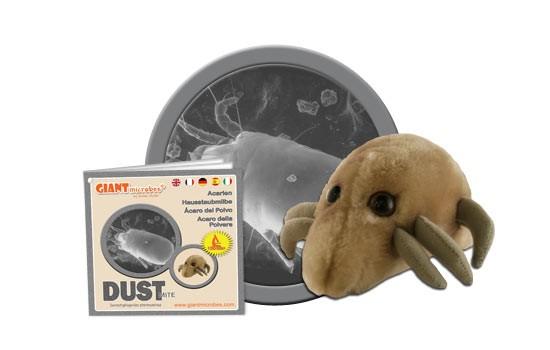 Dust Mite (Dermatophagoides pteronyssinus)