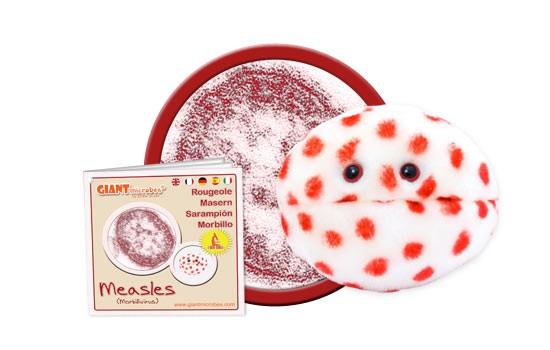 Measles (Morbillivirus)