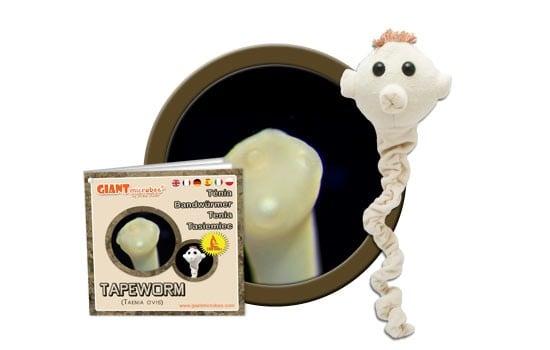 Tapeworm (Taenia ovis)