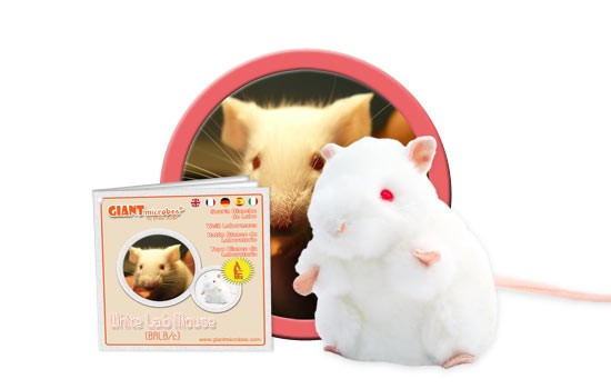 White Lab Mouse (BALB/C)