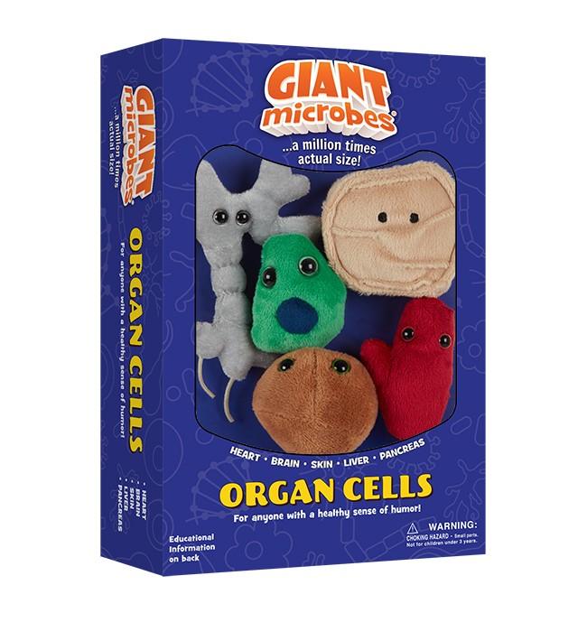 Organ Cells