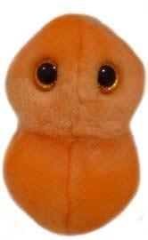 Ear Ache (S. pneumoniae)