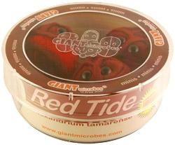 Red Tide (Alexandrium tamarense) Petri Dish