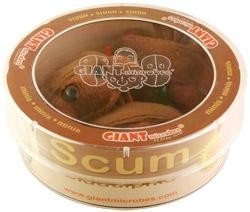 Scum (Biddulphia) Petri Dish