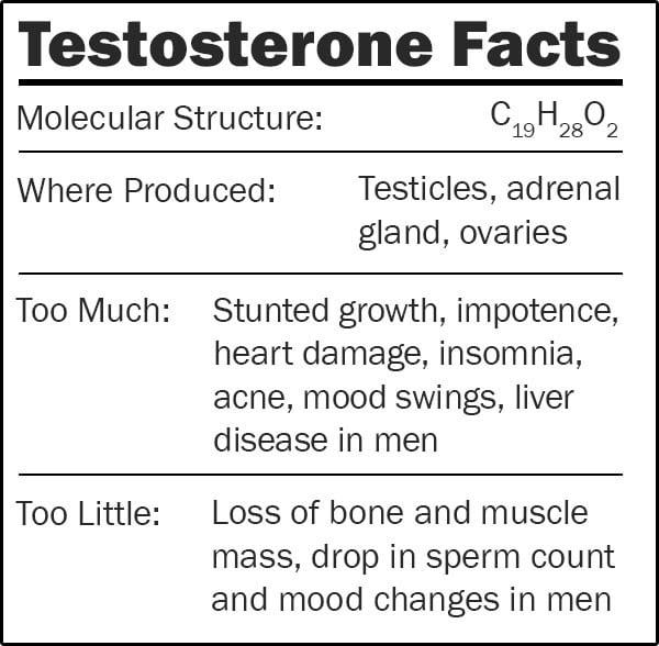 Testosterone plush doll