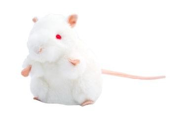 White Lab Mouse (BALB/C)
