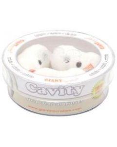 Cavity (Streptococcus mutans) petri dish