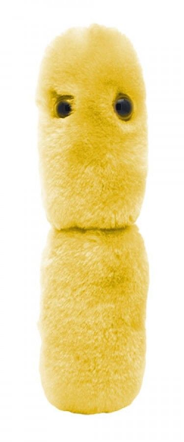 Acidophilus plush doll