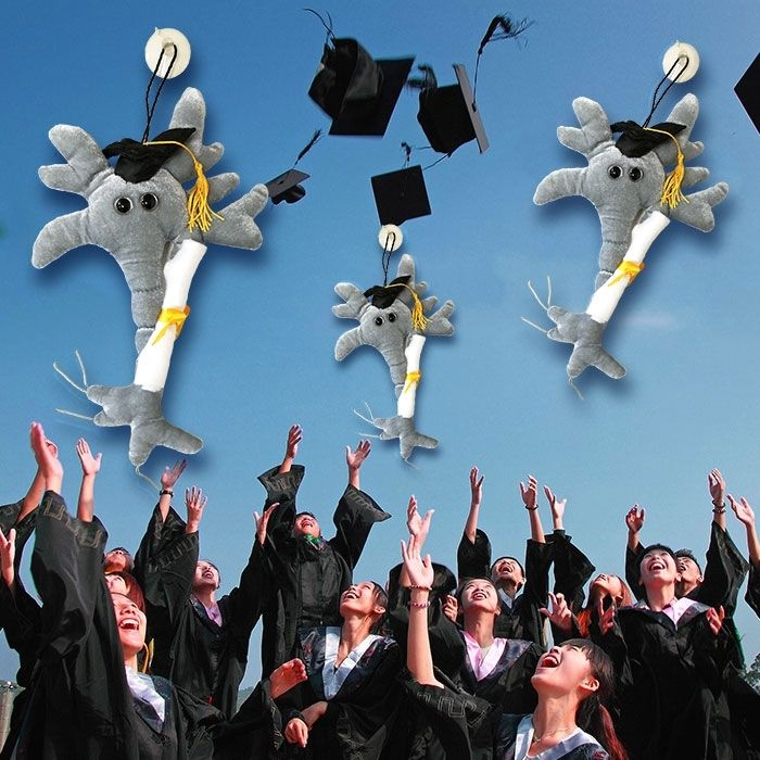 Graduation Brain with Diploma toss