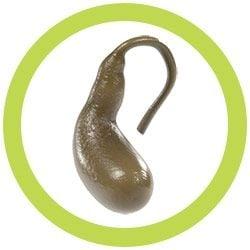 Gallbladder real image