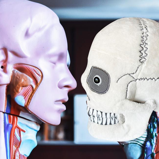 Skull looking at model