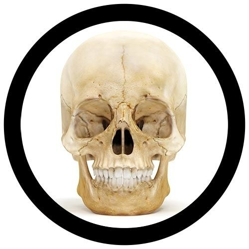 Skull real image