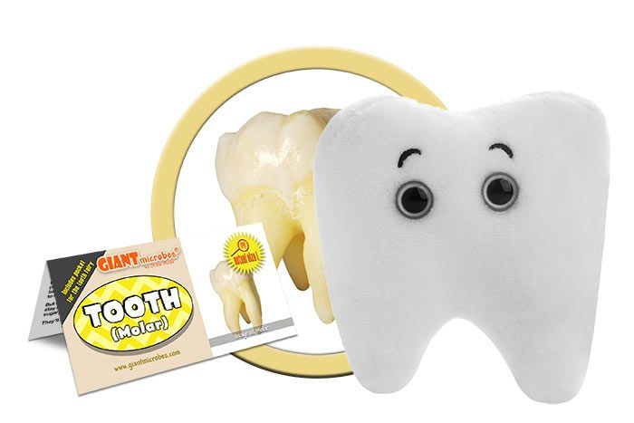 Tooth plush cluster