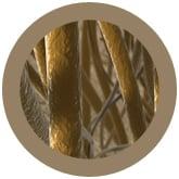 Hair (Pilus) - Brown under a microscope!