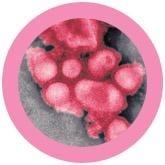 Swine Flu Key Ring 12 Pack under a microscope!