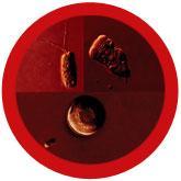 Brain-Eating Amoeba (Naegleria fowleri) Petri Dish under a microscope!