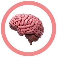 Brain under a microscope!