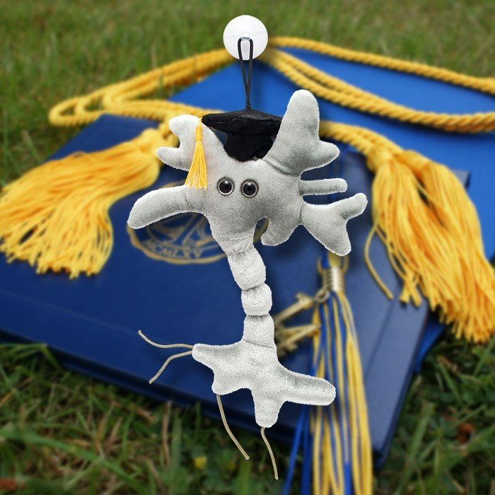 Graduation Brain Cell (Neuron)