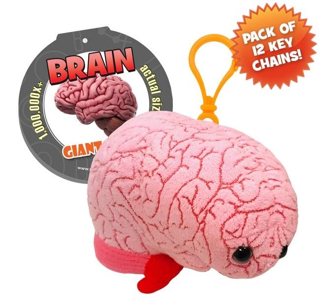 Brain Key Chain 12 Pack