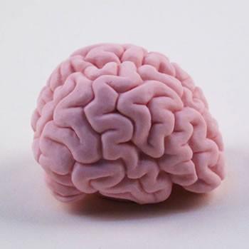Brain soap side