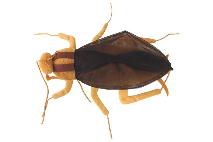 Cockroach front