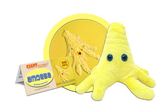 Amoeba (Amoeba Proteus) - Yellow