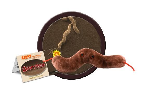Diarrhea (Campylobacter jejuni)