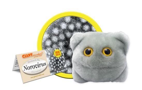 Norovirus (Norovirus)