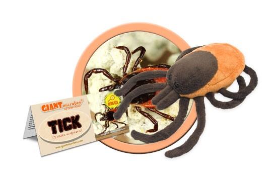 Tick (Ixodes scapularis)