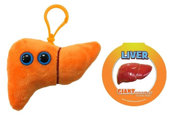 Liver key chain