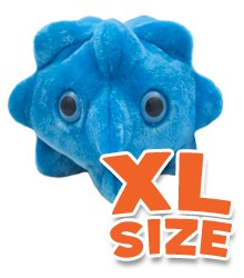 """Common Cold XL 10"""""""